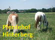 Pferdehof Hinterberg-