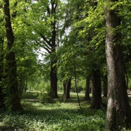 Natur im Park-